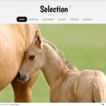Horse Flash Template